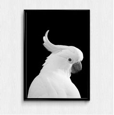 Check out this item in my Etsy shop https://www.etsy.com/listing/258534183/parrot-prints