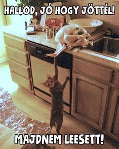 Funny Thanksgiving Memes, Thanksgiving Pictures, Funny Images, Funny Photos, Wtf Funny, Hilarious, Animals And Pets, Funny Animals, Picture Fails