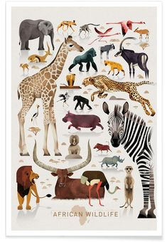 """African Wildlife"" is a new poster artwork by the Hamburg illustrator Dieter Braun. On many journeys Dieter Braun studies in detail animals of all Safari Bedroom, Animal Bedroom, Bird Poster, Poster Art, Poster Boys, African Babies, African Animals, Art Mural, Wall Art"