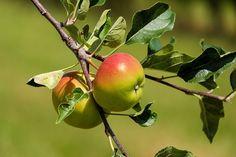 Gambar gratis di Pixabay - Apple, Buah, Buah Buahan