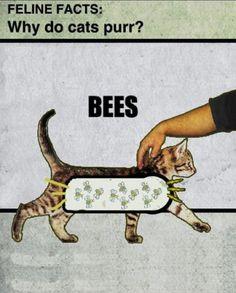 Seems Like a Scientific Explanation