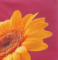 Yellow and pink (photograph)