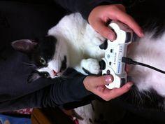 「天才ゲーマー現る!」 なかなかアナログコントローラの操作は難しいニャー #cat  #猫