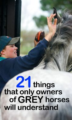 Funny Horse Pictures, Grey Horses, 21 Things, Equestrian, Education, Board, Animals, Animales, Animaux