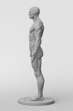 Exceptional Drawing The Human Figure Ideas. Staggering Drawing The Human Figure Ideas. Male Figure Drawing, Figure Drawing Reference, Anatomy Reference, Body Anatomy, Anatomy Male, Digital Art Software, Anatomy Sculpture, Human Anatomy Drawing, Human Anatomy Model
