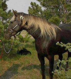 All The Pretty Horses, Beautiful Horses, Animals Beautiful, Asturian, Types Of Horses, Draft Horses, Horse Love, Horse Breeds, Horse Art