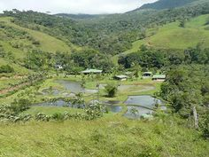 Sustainable living Costa Rican style. Grow your own everything including tilapia