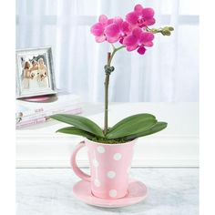 Orchid in a teacup