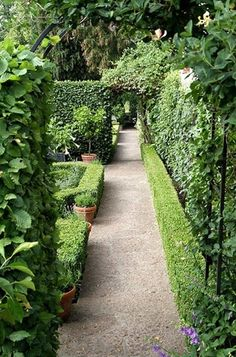 amazing hedges, low + high // pea gravel pathway // ivy // archway // potted trees