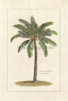 Tropical Palm Tree Art Print  - Natural History - Vintage   8 x 10  Beach. $15.00, via Etsy.