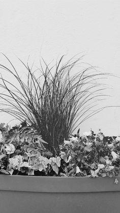 Dans mon petit jardin d'hiver... Jardinière @decocrush x @brindejardin !
