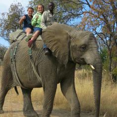 Lovely to ride on a elephant