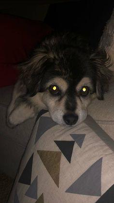Cutest Dog On Earth, Calum 5sos, 5sos Preferences, 5sos Memes, Happy Guy, Calum Thomas Hood, 5 Seconds Of Summer, Petunias, Cute Dogs