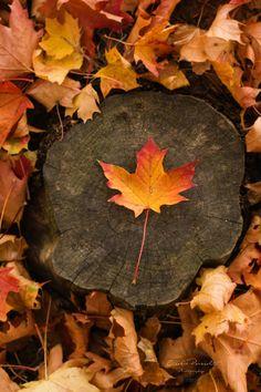 Autumn - null