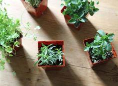Conoce las hierbas aromáticas que crecen perfectamente a la sombra.... ideales para apartamentos...