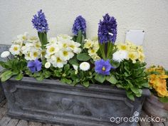 Spring Flowers, Floral Wreath, Wreaths, Garden, Decor, Balcony, Floral Crown, Garten, Decoration