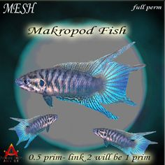 Snorkeling through clear tropical waters you'd come across this dazzling beauty. The Makropod. It's stripes of neon blue on the fins & shimmering  pink stripes on it's body is truly a sight to behold. The mesh replica is details upon details. From a delicately molded mesh body to the incredibly realistic texture & coming in at 1 land impact this is a not to miss addition to any aquatic setting. ! Please read & adhere to the terms of use which apply to all full permission Fantasy China…