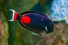 How To Get Started With Salt Water Fishing – Fanel Sport Saltwater Aquarium Fish, Saltwater Tank, Reef Aquarium, Marine Aquarium, Marine Fish, Underwater Creatures, Ocean Creatures, Colorful Fish, Tropical Fish