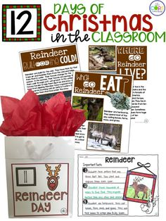 Printable text about reindeer for primary grades and MORE