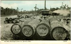 """Cooper Postcard Collection """"Saw Mill, Mississippi Lumber Co., Quitman, Miss."""" """"All in one tree"""""""