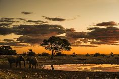 African Sky | Totally Amazing World