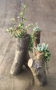 Simple, natural DIY succulent planters from tree branches! Step-by-step tutorial for these tree branch planters - I am obsessed with them! Pin now, and read later! diy garden tips DIY Tree Branch Planters for Succulents