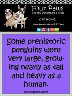 Penguin Fact Penguin Facts, Prehistoric, Penguins, History, Historia, Prehistory, Penguin, Prehistoric Age