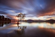 One Calm Tree. - A whirlwind trip around New Zealand's top landscape locations ended with a gloriously calm morning at Lake Wanaka.  We'd travelled 1500kms in 5 days and slept barely 18 hours , finding our peace on the shore if only for an hour before the drive back to Christchurch.