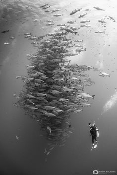 School of fish (species unknown) www.flowcheck.es taller de equipos de buceo #buceo #scuba #dive