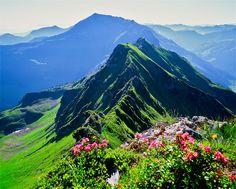 Almrosen - Blick auf den Galtenberg im Alpbachtal/Tirol