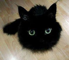 Wow ! What a great pic of a very cute kitty!