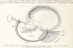 Image taken from page 636 of 'Dictionnaire des sciences anthropologiques ... publié sous la direction de A. Bertillon, Coudereau, A. Hovelacque, Issaurat [and others], etc'