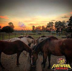 Saddle up!  It's Firework Friday!  #FireworkFriday #TNTFireworks #Friday #Fireworks