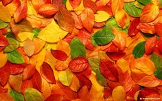 The color of the leaves - Autumn color leaf Wallpa Wallpapers