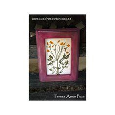 Cuadro hypecoum imberbe - Artesanía botánica Terbotanic