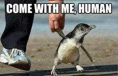 Let me show you the penguin way