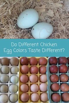 We've all heard people say they prefer brown eggs to white eggs. Others look at green eggs from your easter eggers and ask how they taste. Do different chicken egg colors taste different. Find out the truth and how chicken eggs get their colors.
