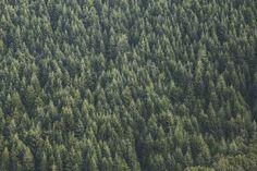 Forest, wallpaper, nature wallpapers and nature backgrounds HD photo by Samuel Scrimshaw (@samscrim) on Unsplash