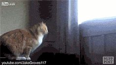 Cats Are Supposed To Be Agile (gif)