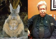Pawn Stars Rabbit The Old Mans hare.