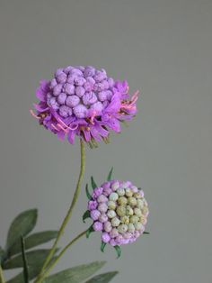 Paper Flower by Jude Miller