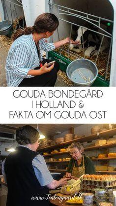 En Gouda bondegård i Holland og 10 fakta om Gouda ost - TeaTougaard.dk Gouda, Utrecht, Rotterdam, Holland, Ost, The Hague, The Nederlands, The Netherlands, Netherlands