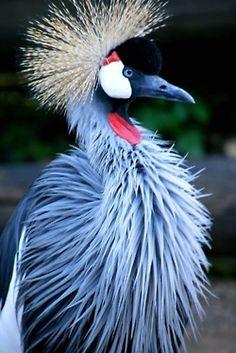 RSA National Bird - Secretary Bird