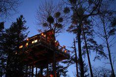 Det er ikke bare nøtteliten som kan bo i toppen av et tre – det kan du og! I tretoppene ligger ... Amazing Hotels, Best Hotels, Home And Away, Oslo, Glamping, Cabin, House Styles, Decor, Nature