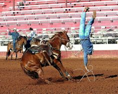 745 Best Rodeo Images In 2019 Rodeo Rodeo Life Rodeo