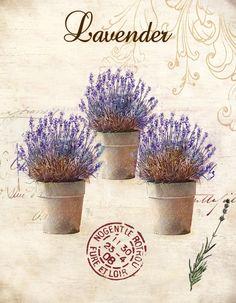 Obraz na plátně-lavender - zvětšit obrázek