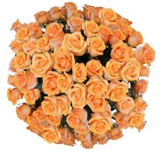50 Giant, Incredibly Fragrant Long Stem Champagne Roses From Spring in the Air Luxury Roses