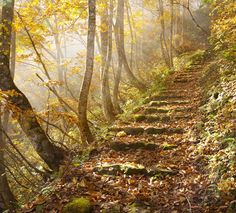 Let's Go For A Walk In The Magic Trail
