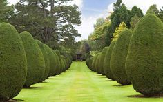 Our perfect wedding day grounds at The Elvetham (or as Adam says 'Wayne Manor') Wayne Manor, Beautiful Gardens, Perfect Wedding, How To Memorize Things, Sidewalk, Wedding Day, Around The Worlds, England, Romantic