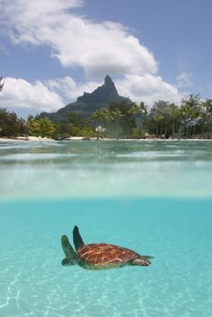 in Bora bora. Want to snorkel with this guy! So cute